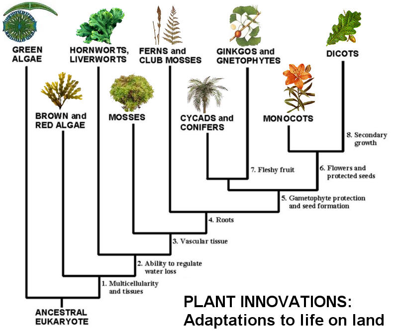evolution of plants If evolution were true, all plants, animals, and insects would be in a continual state of change no two creatures would be identical,.